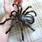 Giant Spider av Linda Lundqvist